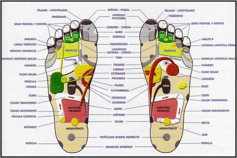 reflexologia mapa pies servicio