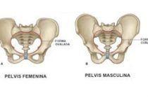 Lesiones más frecuentes de la pelvis. Signos y síntomas