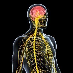 """El dolor crónico es un síntoma de """"desconfiguración"""" del sistema nervioso central."""