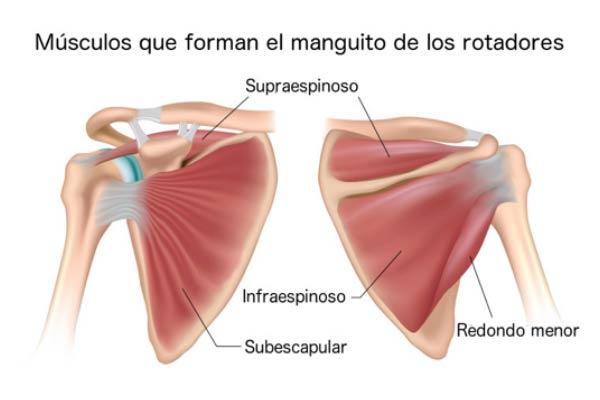 Lesiones-mas-frecuentes-del-manguito-rotador